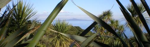 Looking at Rangitoto Island from the Tiritiri Matangi Sanctuary, 2007.