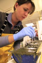 Sampling from one of our Astoria Canyon cores during the UNOLS Early Career Training Cruise in 2011.